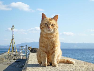 ネコの島イメージ
