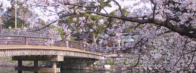 八代城の桜
